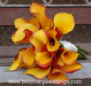 bloomerweddings