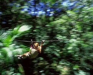 4seasons-jungle-canopy